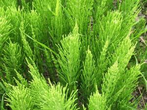 Какие травы можно пить во время беременности