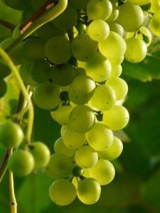 Масло виноградных косточек для тела