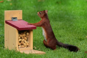 Как хранить арахис