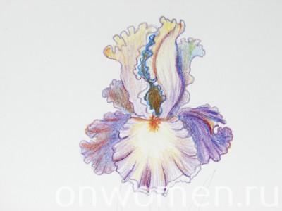 iris-karandashom13