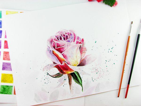 Роза акварелью