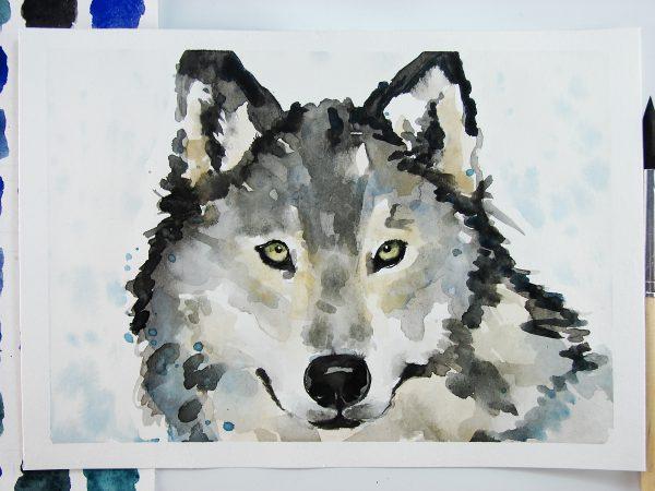 Волк акварелью