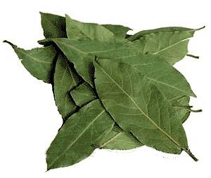 лечение геморроя отваром из лаврового листа