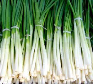 Как хранить зелёный лук