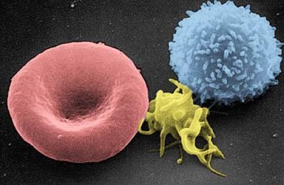 низкие тромбоциты в крови о чем это говорит у мужчин