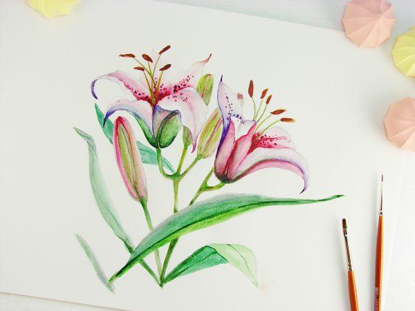 Лилия акварелью